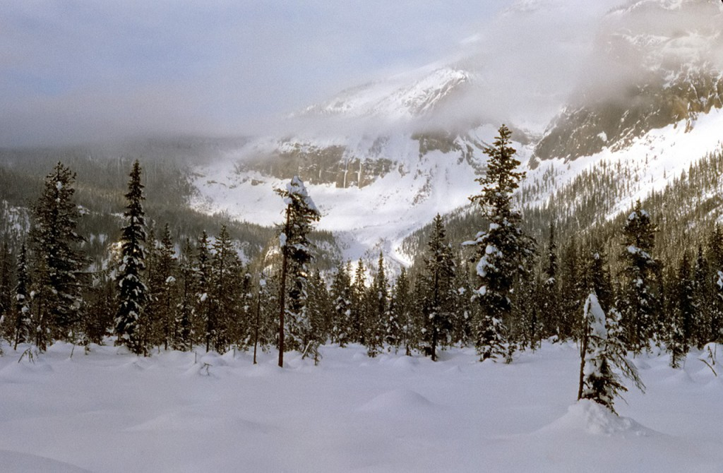 A winters morning - dads pick