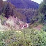 Astilbe creek