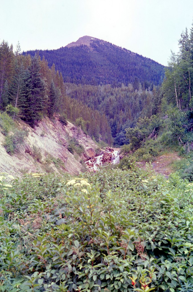 Astilbe creek - dads pick