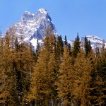 Cathedral Mtn and alpine larches