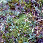 Miniature wild flowers