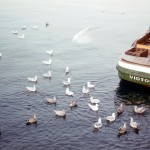 Sea gulls near the fish boat