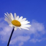 Flower on blue sky