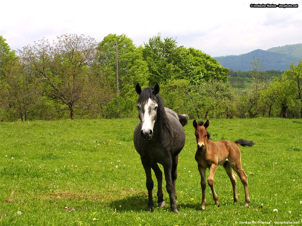 Horse With Baby Beautiful Horses Wallpaper