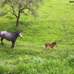 Horse with kiddy horse