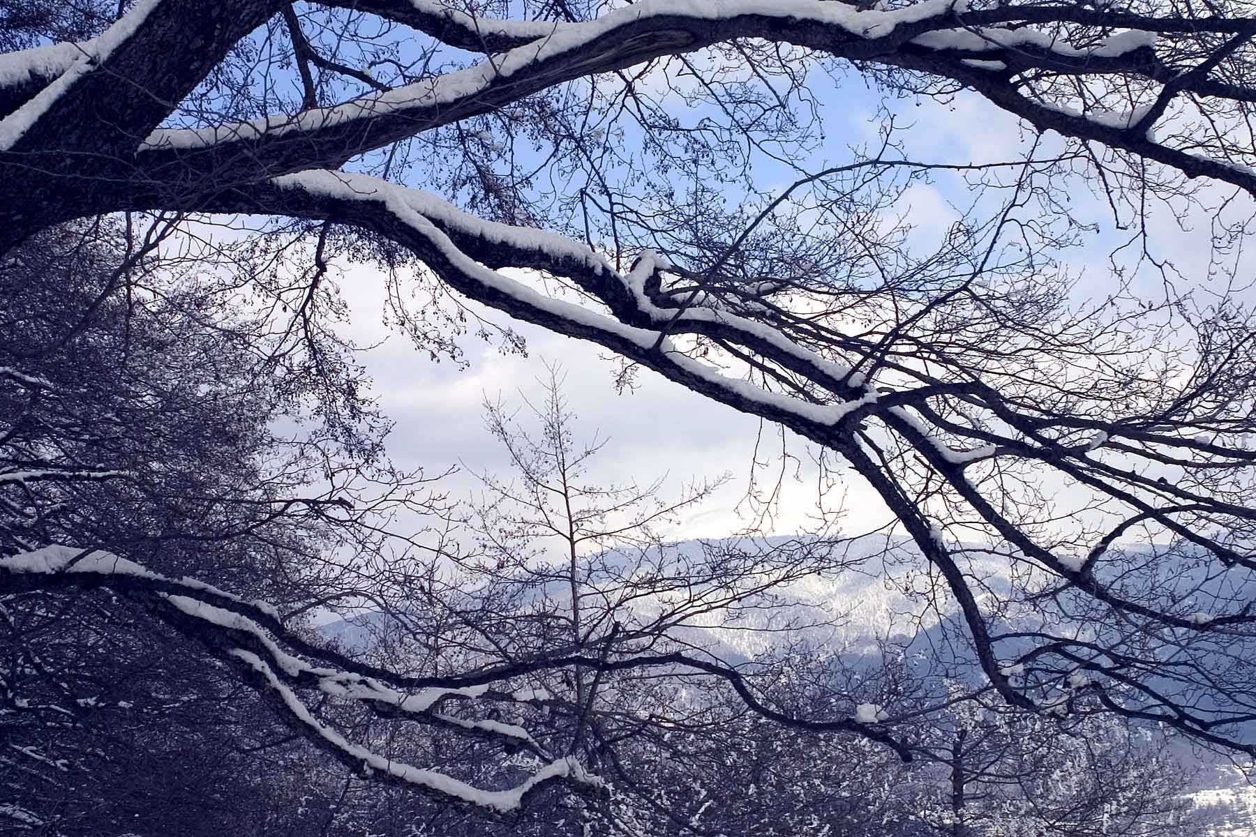 Tips for using your camera in cold weather