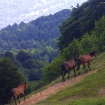 Wild horses on mountain paths